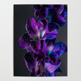Blue and Purple  Poster