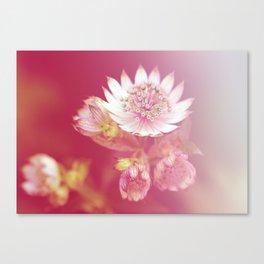 Star umbel flowers Canvas Print
