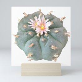 "Peyote ""Lophophora Williamsii"" Mini Art Print"