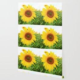 Sonnenblumen 3 Wallpaper