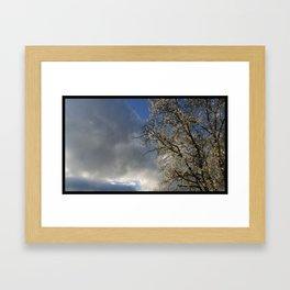 Cherry Bloom Sky Framed Art Print