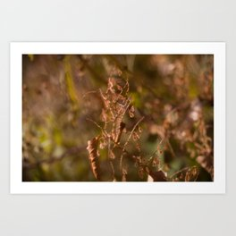 HOME: EARLY OCTOBER, WEEDS Art Print