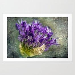 Allium Blossoms Art Print
