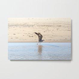 Seagull bird taking off Metal Print