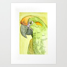 Sap Green Parrot Art Print