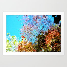 Smoke Tree Art Print