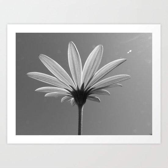 Lit Daisy Art Print