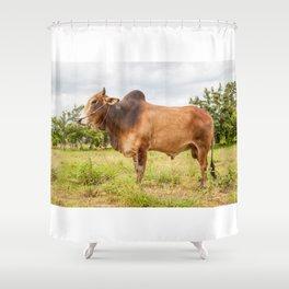 Thai cow bull Shower Curtain