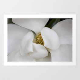 White Magnolia, Magnolia Photograph, Flower Photograph, Nature Photography,  Art Print