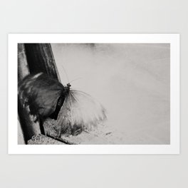 a trapped butterfly ...  Art Print