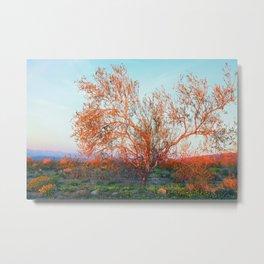 Dawn's First Light at Joshua Tree National Park Metal Print