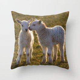 Cute little lambs Throw Pillow