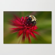 The Honey Collector Canvas Print
