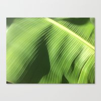 banana leaf Canvas Prints featuring Banana Leaf by Glenn Designs