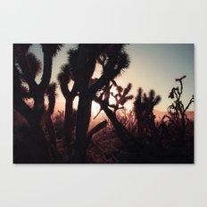 Joshua Trees at Sunset Canvas Print