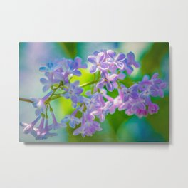 Purple Lilac Flowers Metal Print