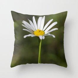 Shasta Daisy 1 Throw Pillow