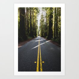 Redwoods Road Trip - Nature Photography Art Print