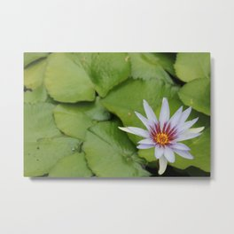 Blooming Waterlilies Metal Print