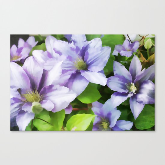 Delicate Climbing Clematis Canvas Print