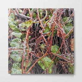 Freezing Rain On Green Ivy Vines Metal Print