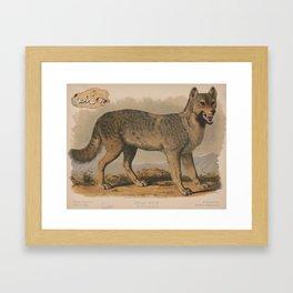 Vintage Illustration of a Gray Wolf (1874) Framed Art Print