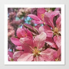 Pretty Pink Crabapple Flowers Canvas Print