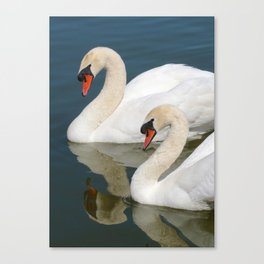 Mute Swan Pair Profile Canvas Print