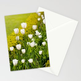 White tulips in buxus arrangement Stationery Cards