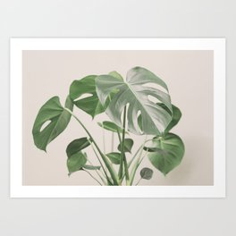 My monstera Art Print