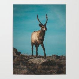 Got Elk? Poster