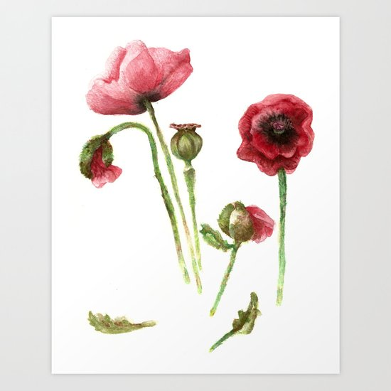 Red Poppies - Botanical Art - watercolor Art Print