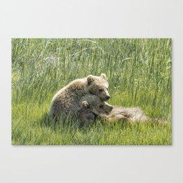 I Got Your Back - Bear Cubs, No. 4 Canvas Print