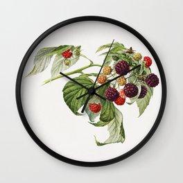Purple Raspberry (Rubus Xneglectus) (1918) by Royal Charles Steadman Wall Clock
