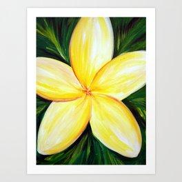 Aloha; White Plumeria Art Print