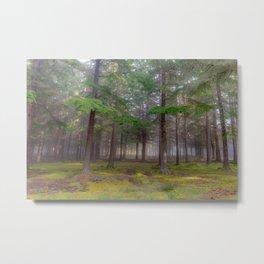 Magic forest - Kessock, Highlands, Scotland Metal Print