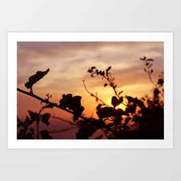 The Sun Peeks Through Art Print