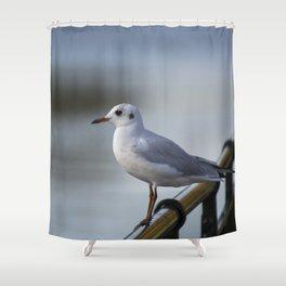 Dreamy gull Shower Curtain