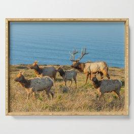 Tule Elk Herd Serving Tray