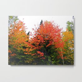 Forest Pallet of Colors Metal Print