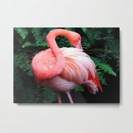 Flamingo Stretch Metal Print