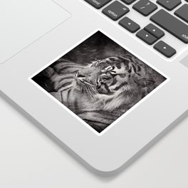 The mysterious eye of the tiger. BN Sticker