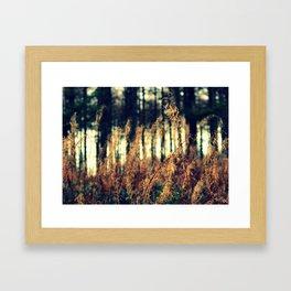 Spindles Framed Art Print