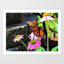 Butterflies And Pink Cornflowers Art Print