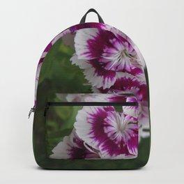 Sweet Purple n White Dianthus Backpack