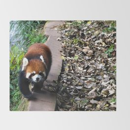 Red Panda in Chengdu Throw Blanket
