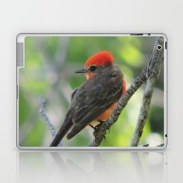Vermilion Flycatcher Laptop & iPad Skin