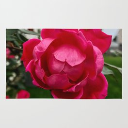 the last rose Rug