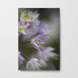 Delicate Purple Flowers Metal Print