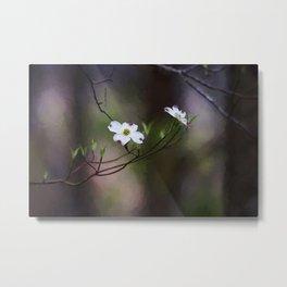Spring Dogwood Blooms Metal Print